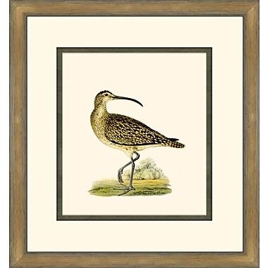 Melissa Van Hise Shore Birds IV Framed Graphic Art
