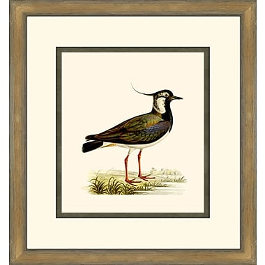 Melissa Van Hise Shore Birds VI Framed Graphic Art