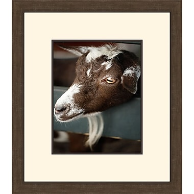 Melissa Van Hise Get Your Goat III by Christie Brace Framed Photographic Print