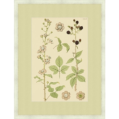 Melissa Van Hise Botany Pl. 57 (A) by Choate Design Framed Graphic Art
