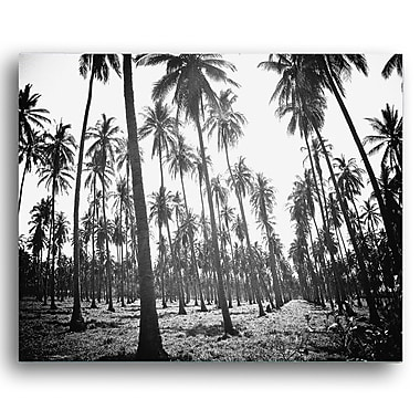 KindredSolCollective 'Palms' by Ed Fladung Photographic Print on Wrapped Canvas; 36'' H x 48'' W