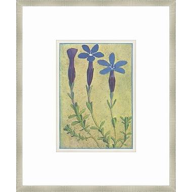 Melissa Van Hise Alpine Flora XIII Framed Graphic Art