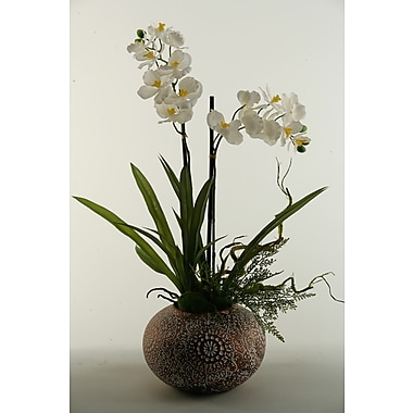 D & W Silks Vanda Orchids Floor Plant in Planter