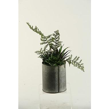 D & W Silks Echeveria / Aloe / Succulent Desk Top in Decorative Vase