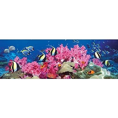 Affiche poissons tropicaux, 36 x 12 po