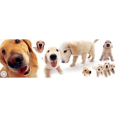 Affiche chiots golden retrievers, 12 x 36 po