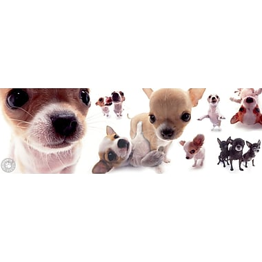 Dogs Chihuahua Poster, 12