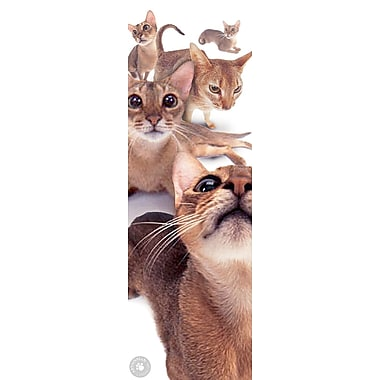 Affiche chats abyssins, 12 x 36 po