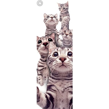 Affiche chats American Shorthair, 12 x 36 po