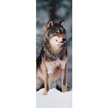 Affiche loup gris, 11 3/4 x 35 3/4 po