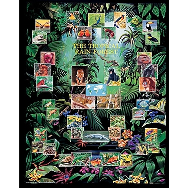 Affiche forêt tropicale, 15 3/4 x 19 3/4 po