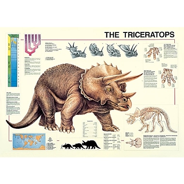 Affiche tricératops, 26,75 x 38,5 po