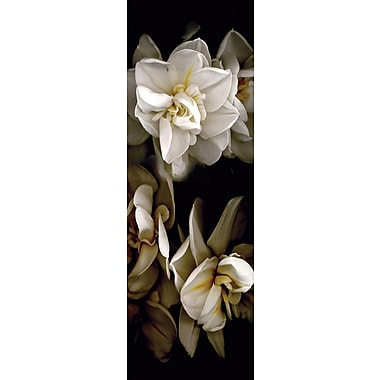 Affiche fleurs blanches I, 11 3/4 x 36 po