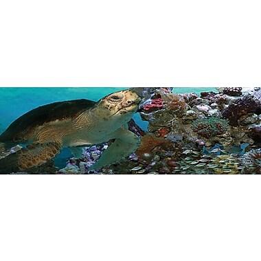 Affiche tortue de mer, 11 3/4 x 36 po
