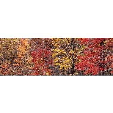 Roaring Fork Fall Colors Poster, 11 3/4
