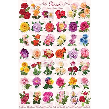 Affiche roses, 24 x 36 po