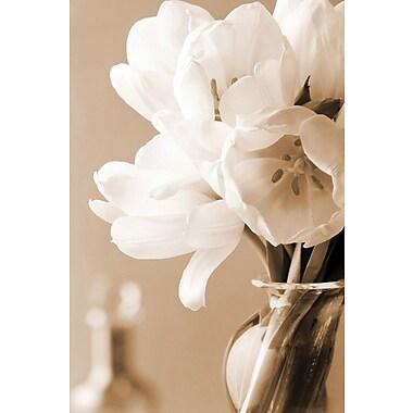 Affiche tulipes en sépia, 24 x 36 po