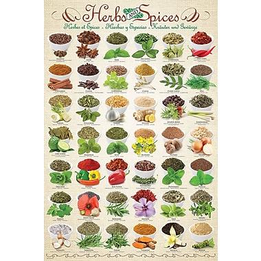 Affiche herbes et épices, 24 x 36 po