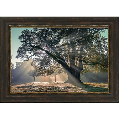 Tangletown Fine Art Breaking Through by Assaf Frank Framed Photographic Print