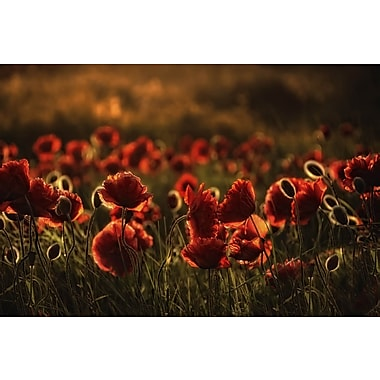 3 Panel Photo Red flowers Photographic Print on Wrapped Canvas