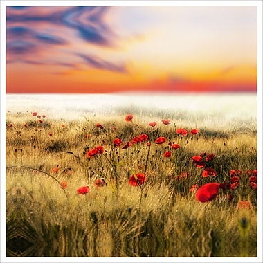 3 Panel Photo Poppies Photographic Print on Wrapped Canvas; 24'' H x 24'' W x 1'' D