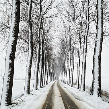 3 Panel Photo A Traveled Path in Winter by Herbert Schroer Photographic Print on Wrapped Canvas