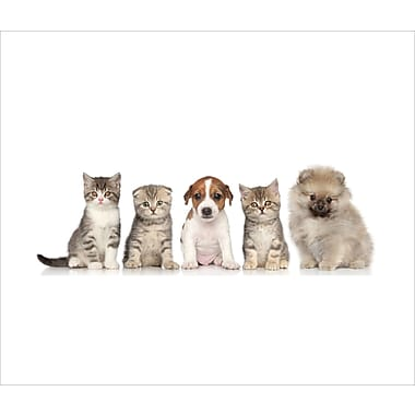 3 Panel Photo Cats and a Dog Photographic Print on Canvas