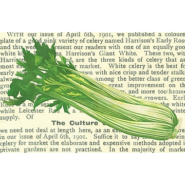 Belle Banquet Celery Placemat (Set of 6)