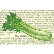 Belle Banquet Celery Placemat (Set of 6)