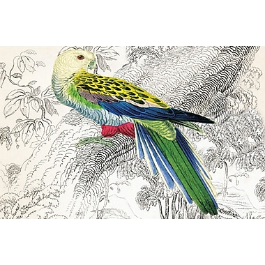 Belle Banquet Parrot Placemat (Set of 6)