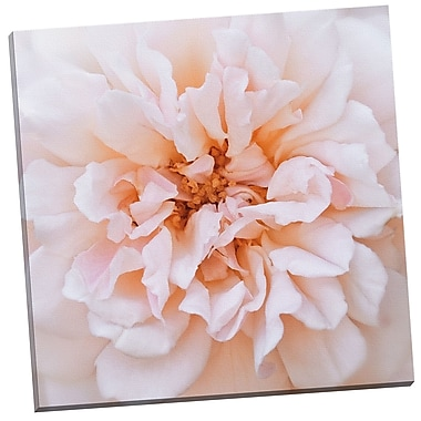 Portfolio Canvas Porcelain Rose by Rebecca Swanson Photographic Print on Wrapped Canvas