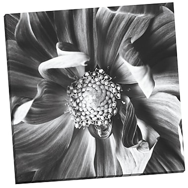 Portfolio Canvas Dahlia III by Michael Harrison Photogarphic Print on Wrapped Canvas