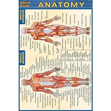 BarCharts, Inc. - QuickStudy® Anatomy 4x6 Pocket Reference Set