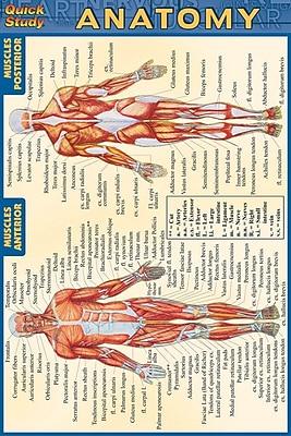 BarCharts, Inc. QuickStudy® Anatomy 4x6 Pocket Reference Set (9781423230410)