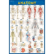 BarCharts, Inc. - QuickStudy® Anatomy Poster Reference Set