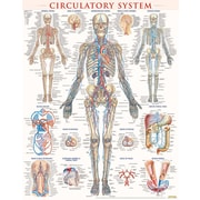 BarCharts, Inc. QuickStudy® Circulatory Poster Reference Set (9781423230786)