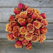 The Bouqs Company Braveheart Tea Roses, Orange, 18 Stems, Without Vase (10654301)