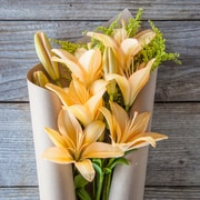 The Bouqs Company Gold Rush Lilies, Yellow, 12 Stems, Without Vase (10110101)
