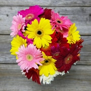 The Bouqs Company Loyal Gerber Daisies, Multicolor, 10 Stems, Without Vase (10858001)