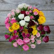 The Bouqs Company Santa Cruzn Spray Roses
