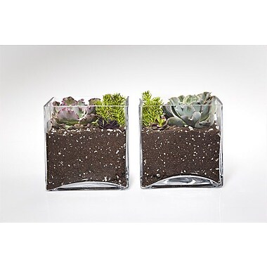 ShopSucculents 2 Piece Echeveria Ruffles Succulent Bookend Plant in Terrarium Set