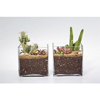 ShopSucculents 2 Piece Euphorbia Corn Cob Cactus Plant in Terrarium Set