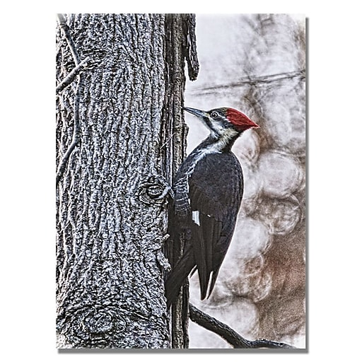 Trademark Fine Art Lois Bryan 'Wood Pecker' Canvas Art 18x24 Inches