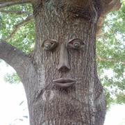 GenuineTreePeeple Simon Tree Face