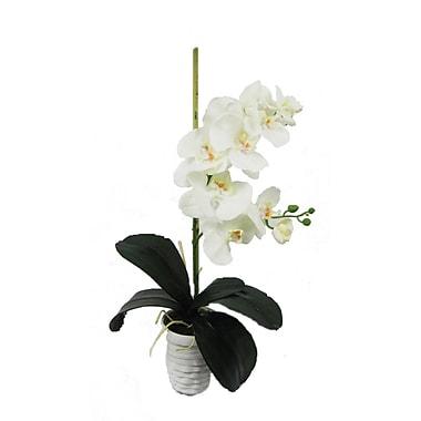 Creative Branch Faux Orchid Arrangement