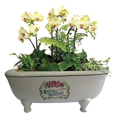 Kingston Brass Savons Superfins Aqua Eden Decorative Mini Bathtub Soap Dish