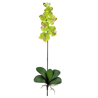 Nearly Natural Phalaenopsis Stem in Green (Set of 12)