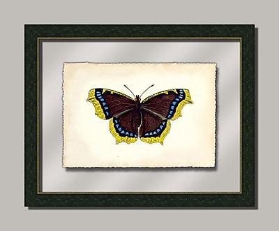 Melissa Van Hise Butterfly Vll Framed Graphic Art