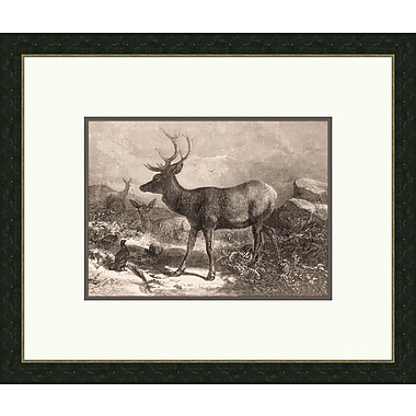 Melissa Van Hise Forest Dwellers Vl Framed Graphic Art