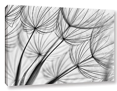 Varick Gallery 'Parachute Seed II' Graphic Art on Wrapped Canvas; 24'' H x 36'' W x 2'' D